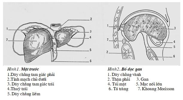 Giải phẫu gan, kỹ thuật chụp và hình ảnh bình thường trên chụp cắt lớp vi tính gan – PGS. Nguyễn Duy Huề, Đại học Y Hà Nội
